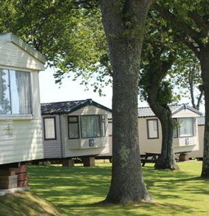 View of caravans within the trees at Cheverton Copse Holiday Park, Sandown