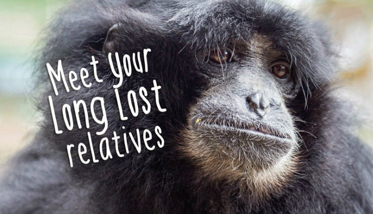 Isle of Wight, Zoo, Monkey Haven, Things to Do, Meet Your Long Lost Relatives