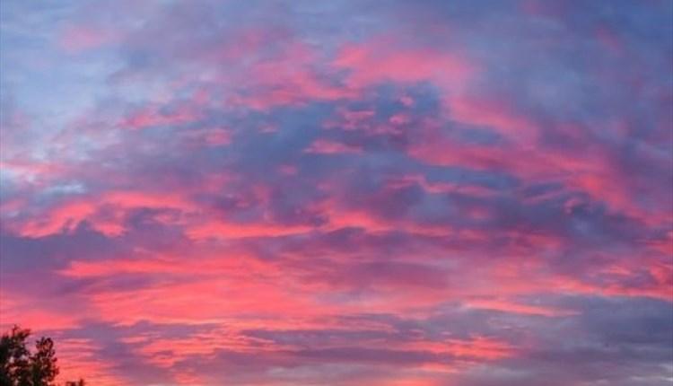 Sunset at Wildheart Animal Sanctuary, Sandown, What's on