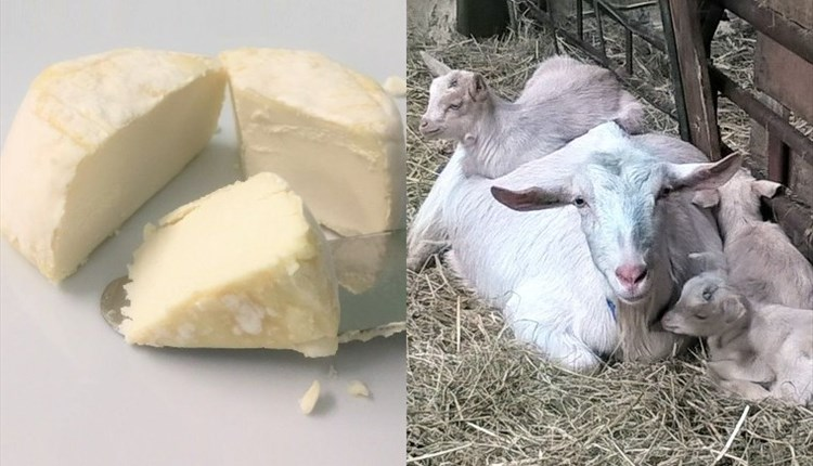 Image showing pieces of goats cheese and a mum goat with three kids, The Green Barn, Bouldnor, West Wight
