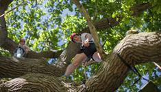 Man and woman climbing tree, Isle of Wight, Things to Do, Tree climbing, Appley Park, Ryde,