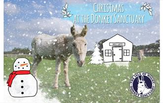 Winter Market poster, Isle of Wight Donkey Sanctuary, What's On, Christmas
