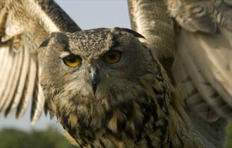 Haven Falconry Bird of Prey Centre