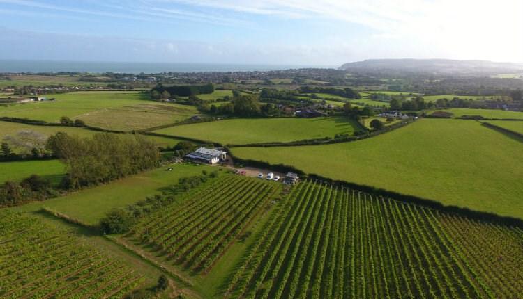 Isle of Wight, Attraction, Adgestone Vineyard, Ariel View of Vineyard