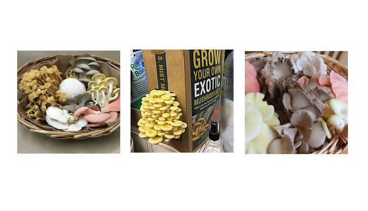 Selection of Isle of Wight mushrooms in baskets and a grow your own mushroom box, local producers, Isle of Wight, local produce, let's buy local