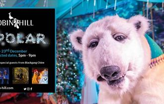 POLAR event poster with times and Pippa the polar bear, Robin Hill, Newport, What's On