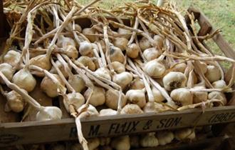 Isle of Wight, Things to Do, events, Isle of Wight Garlic Festival, Basket of Garlic Cloves