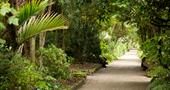 Shaded glades in Tresco Abbey Garden