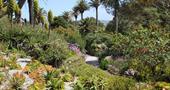 A view across Tresco Abbey Garden