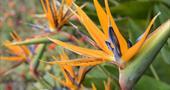 Subtropical planting in Tresco Abbey Garden