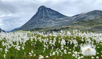Kyrkja 2032 moh i Jotunheimen. Topp som eit kyrkjespir og populær fjelltur midt i Jotunheimen.