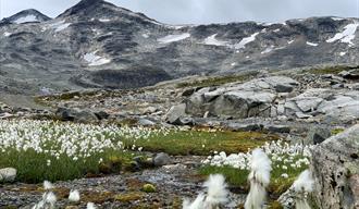 Frå Leirvassbu går ein gjennom Gravdalen mot Skogadalsbøen. Foto: Mari Arnøygard Wedum