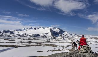 The cairned trail on Sognefjell