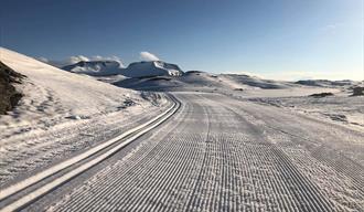 Summer skiing at Sognefjellet