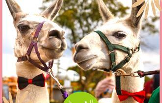 Llama Experience - Wellbeing Farm