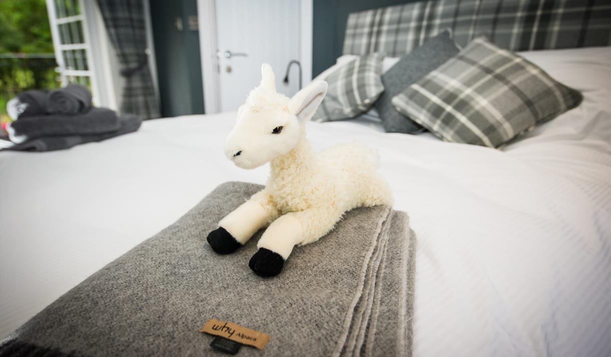 Alpaca Fold Accommodation
