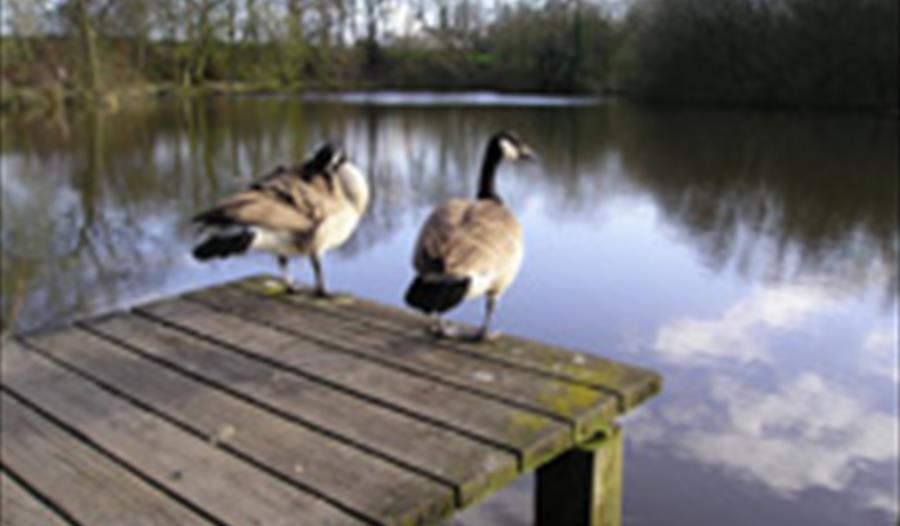 Abbey Lakes