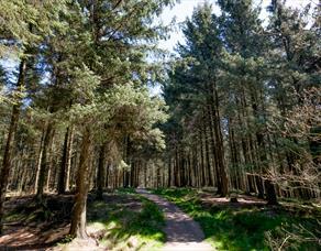 Beacon Fell Country Park