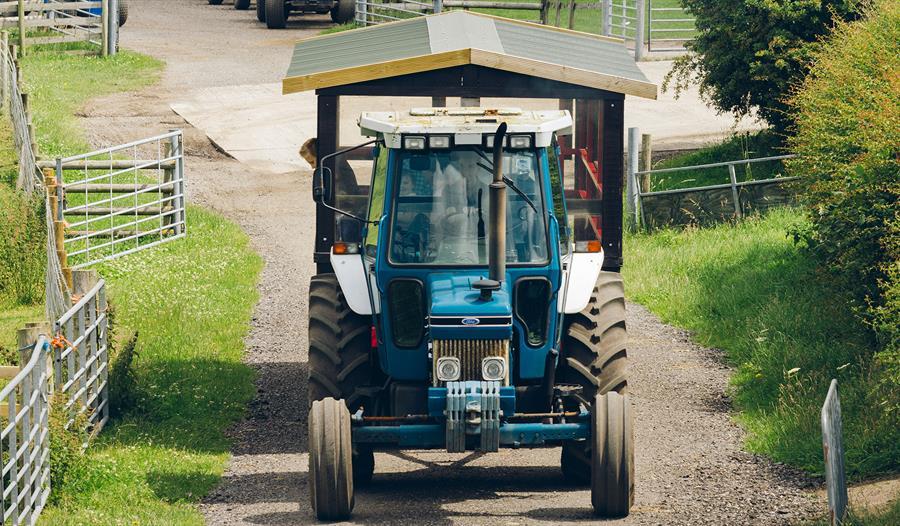Farmer Ted's Farm Park
