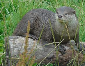 Otter at Wild Discovery