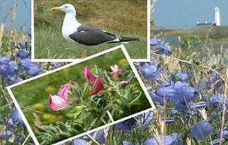 South Walney Nature Reserve