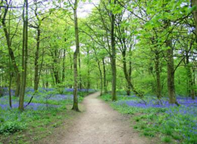 Spring Wood Picnic Site & Access For All Trail