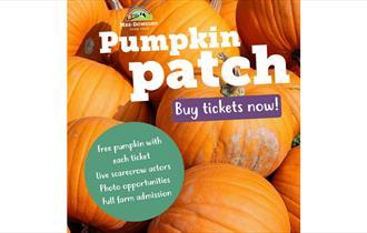 Pumpkin Patch at Mrs Dowson's