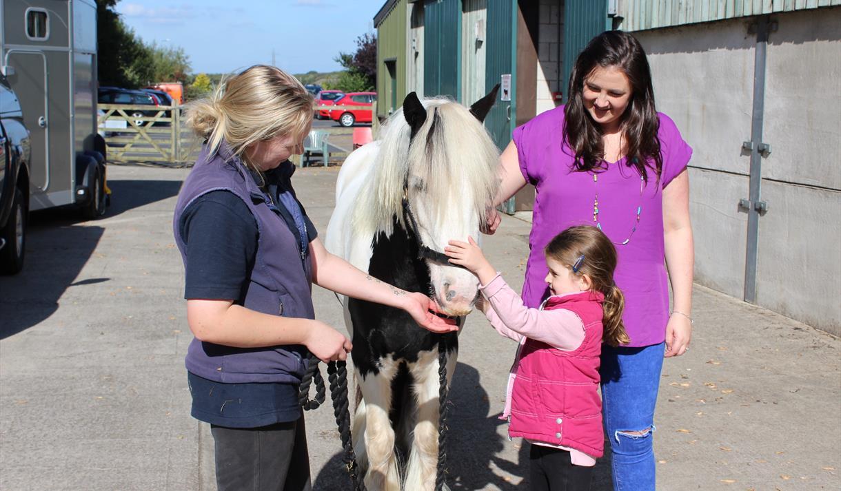 Horse at World Horse Welfare Penny Farm