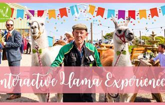 Llama Trekking poster