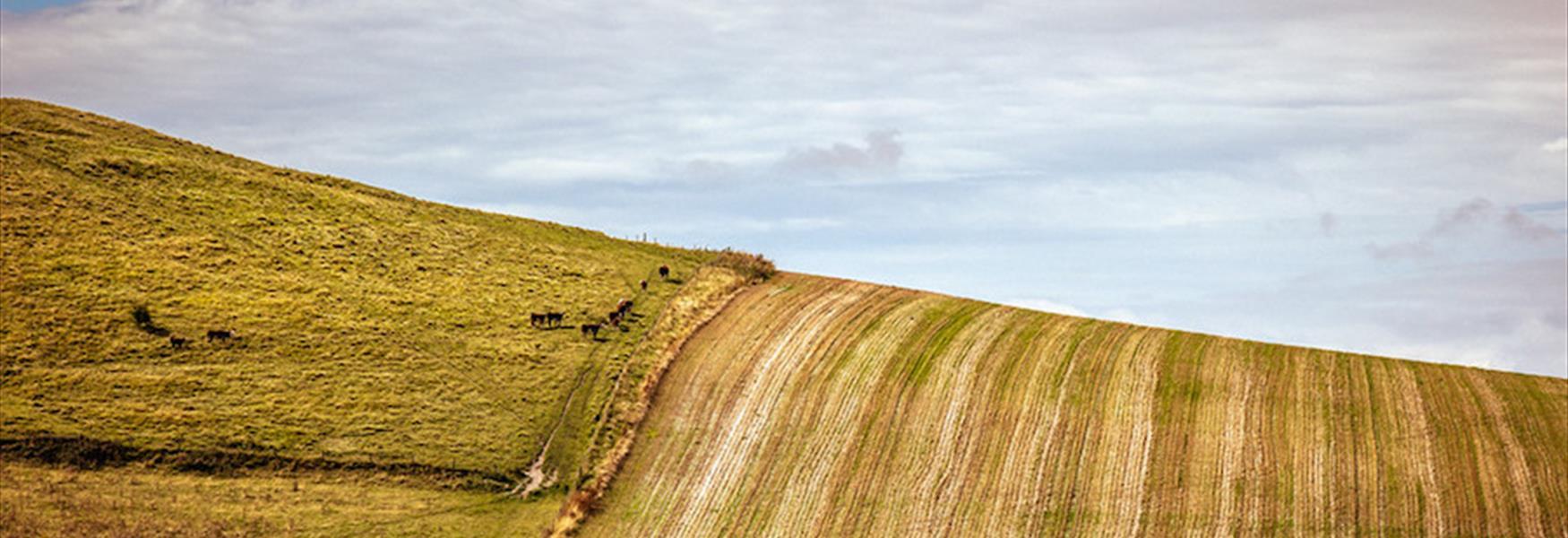 Fields near Firle - Nigel French