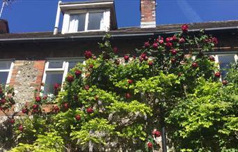 Castle Banks Cottage front elevation with fruit tree