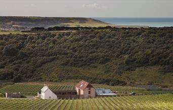 Rathfinny Vineyard View