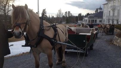 Horse sleigh ride