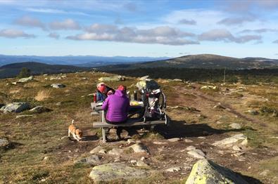 Lunkefjell (1012 moh) fra Nordseter |7km