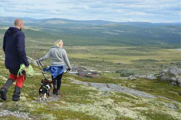 Utsiktspunkt Flaksjølihøgda (1,5 km)