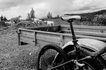 Fahrrad lehnte gegen Geländer mit Schafen im Hintergrund.