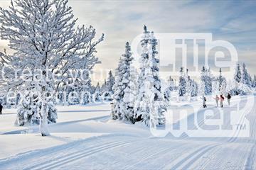 Langrennsløpere i vinterlandskap