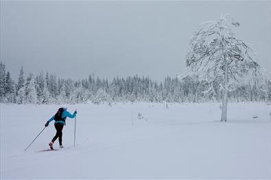 Skiløper i vinterlandskap