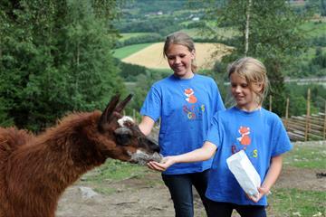 Mating av lama på Barnas Gård Hunderfossen