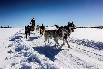 Hundekjøring jul- og nyttår   Sjusjøen Husky Tours