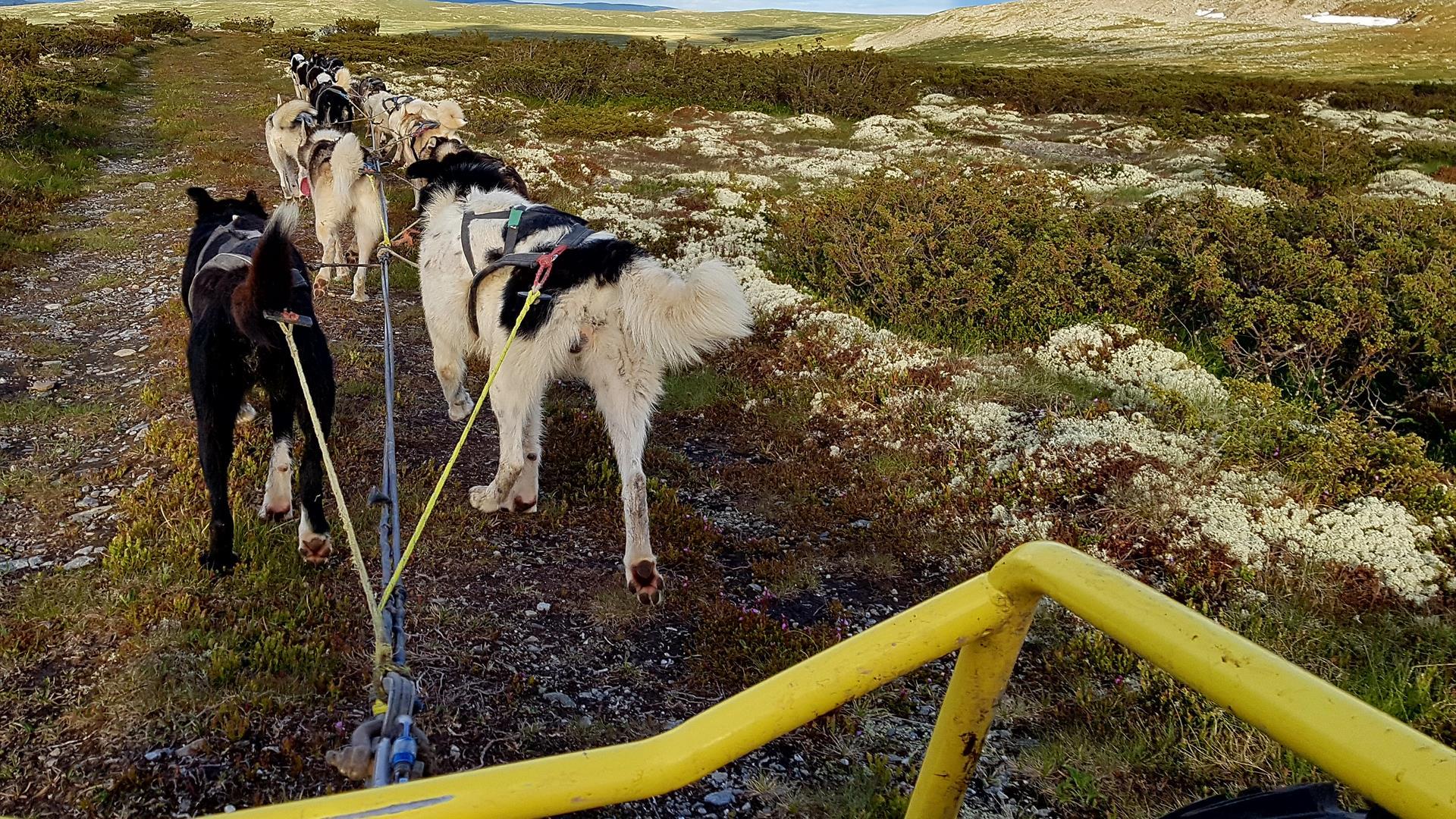 Hundekjøring barmark