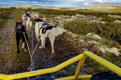 Høstferien hos Sjusjøen Husky Tours