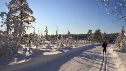 Cross-country Skiing in Lillehammermarka