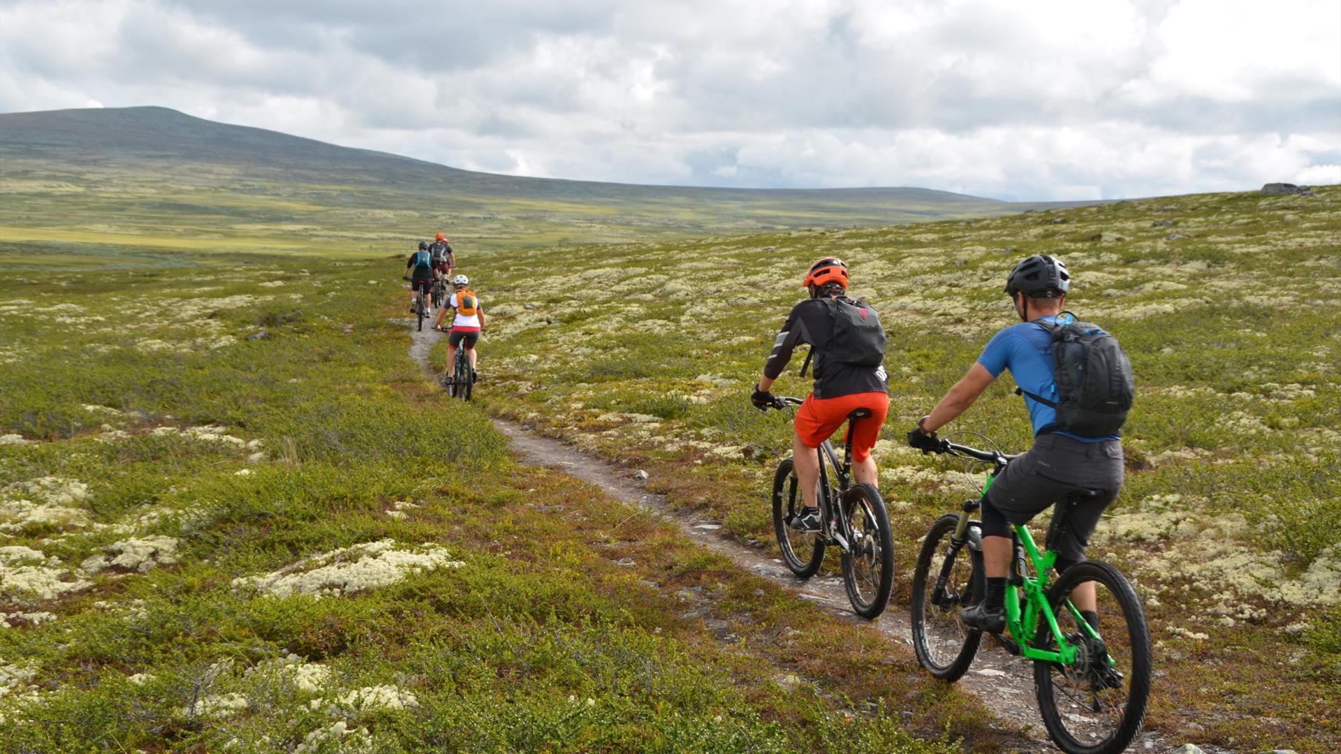 5 Mountainbiker radeln auf einem Pfad auf dem Venabygdsfjellet.
