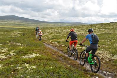 5 stisykelister sykler bortovver ien sti på Venabygdsfjellt.