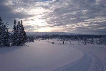 Spåtind Fjellstue - Skjervungsrunden/Rokvamsætra 7,5/14,5 km