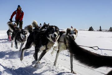 Dog sledding with Sjusjøen Husky Tours