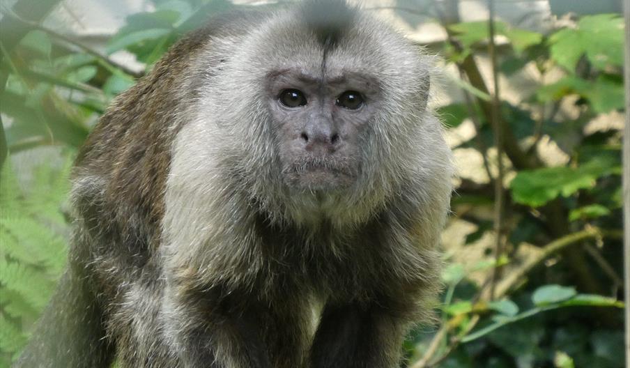 Monkey at the Monkey Sanctuary