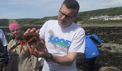 Photo of crab found on a rockpool ramble