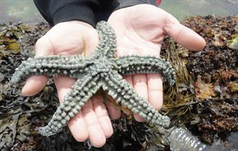 A spiny starfish found in a rock pool